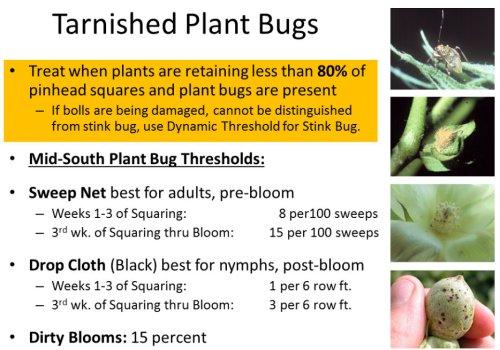 PlantBugs