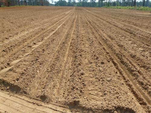 PlantingSorghum 006