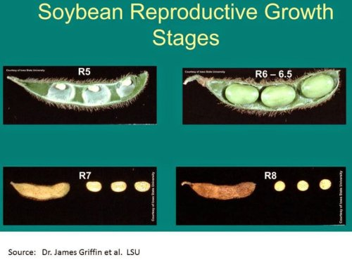 SoybeanReproductiveGrowthStages