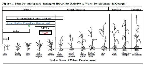 HerbicideTimingInWheat