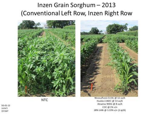 Inzen-Sorghum-2013-E