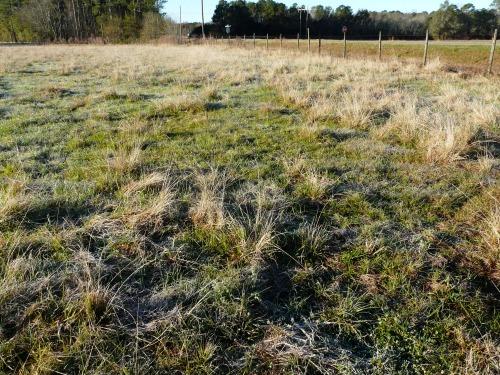 Smutgrass 010