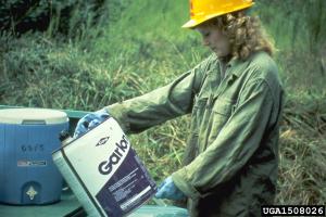 USDA Forestry Service, Bugwood.org 2