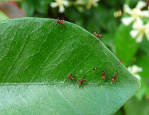 Immature Assissin Bugs