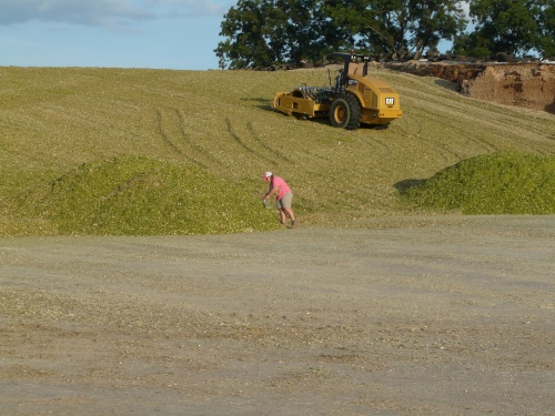 Lowndes County Agent Mihasha Dowdy collects a silage sample