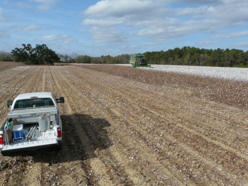 cottonvarietytrial-harvest-015